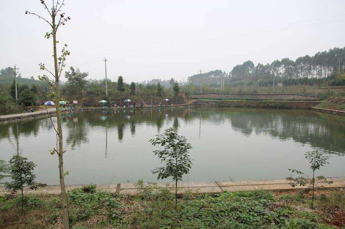 My father's fish pond